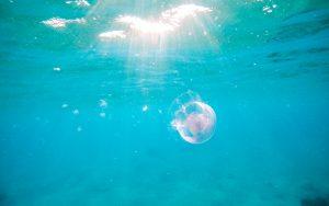 Água-viva no mar nadando contra o Safe Sea